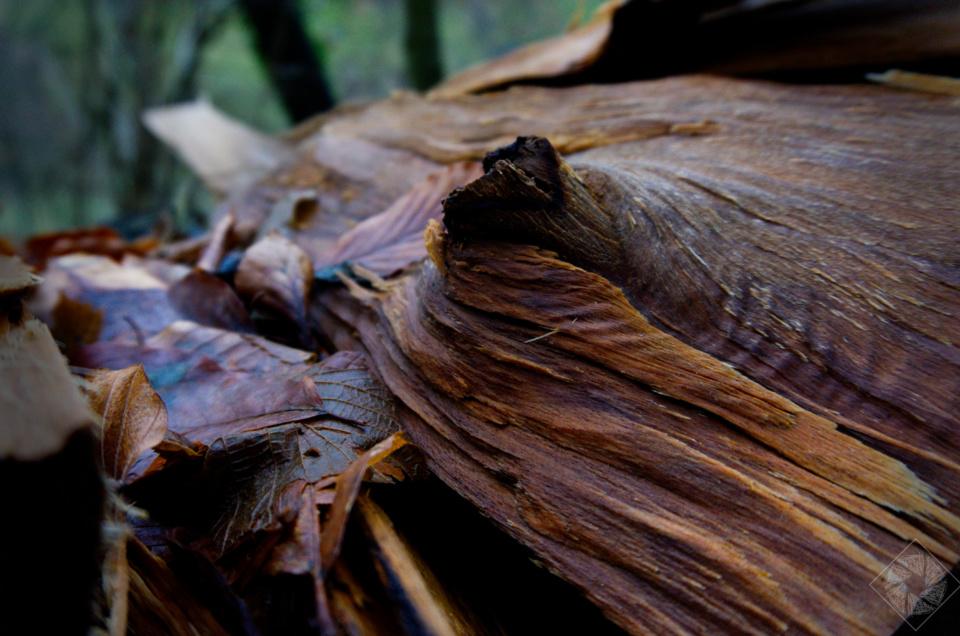 Holzscheit in Farbe – Im Wald bei Lauf (Baden)
