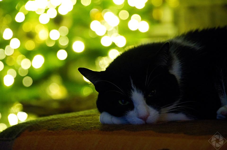 So feiern Katzen Weihnachten
