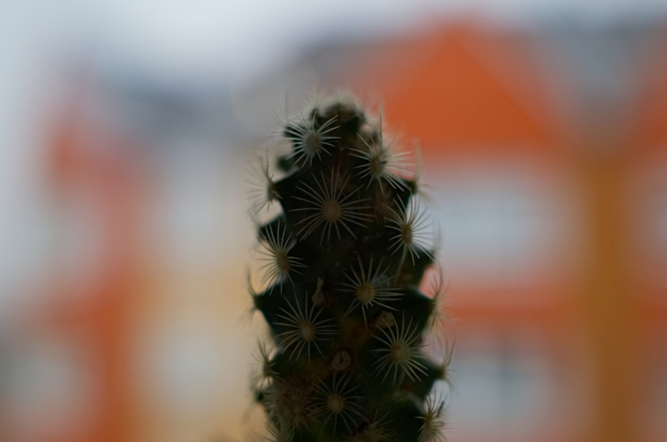 Kaktus in der Nahaufnahme
