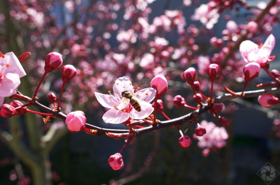 Der Frühling klopft an unsere Tür