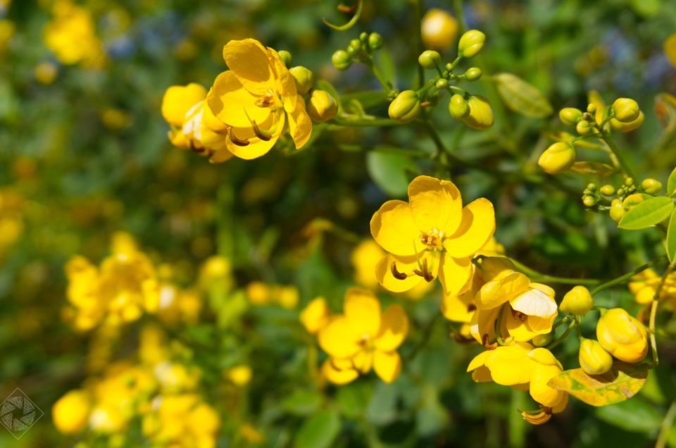 Blüten einer unbekannten Pflanze – Orangerie (Darmstadt, HE)